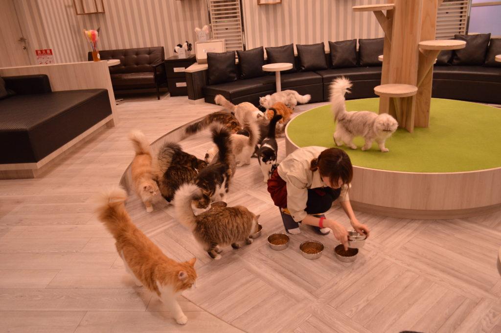 猫カフェモカ アルシェ大宮店のご飯タイム