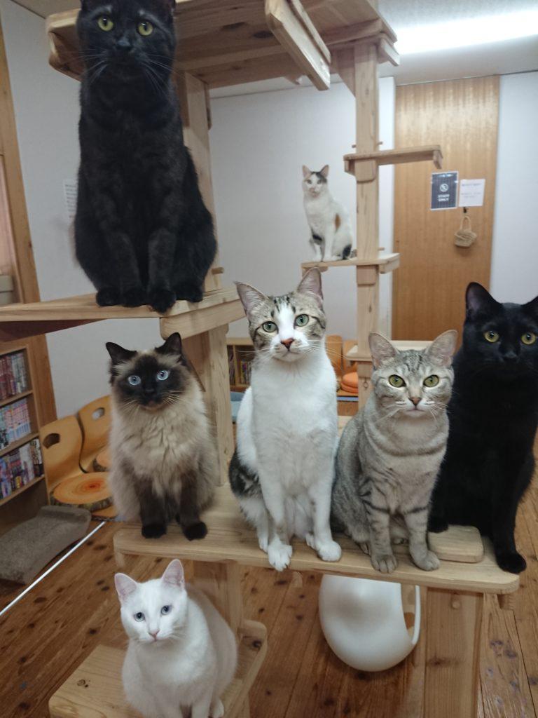 ネコカフェ猫novaの猫