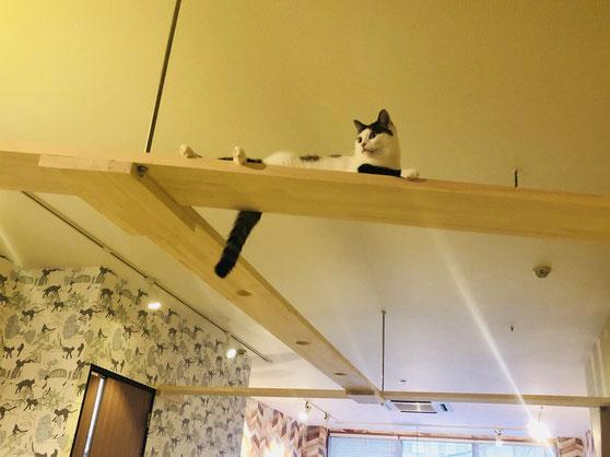 猫カフェかごにゃんの店内