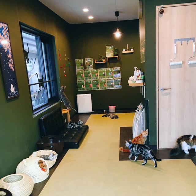 猫カフェ 猫喫茶 空陸家 長崎浜町店の店内