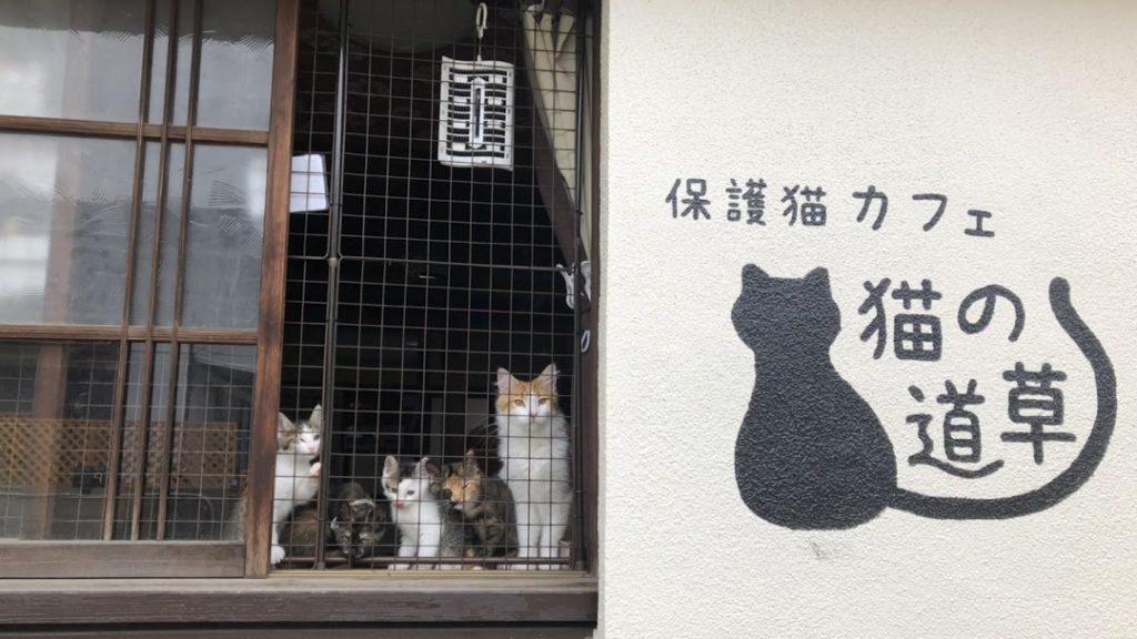 保護猫カフェ 猫の道草のホームページ
