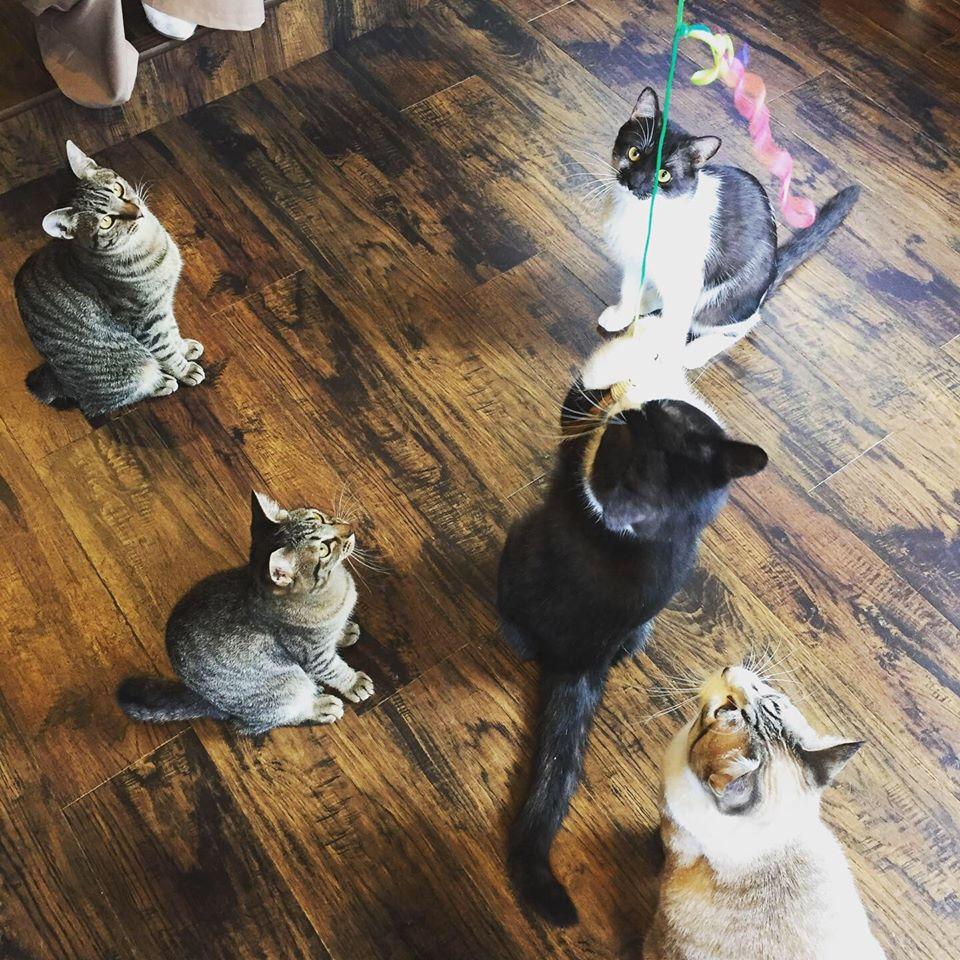 宿木カフェ YadorigiCafe&Restaurantの猫