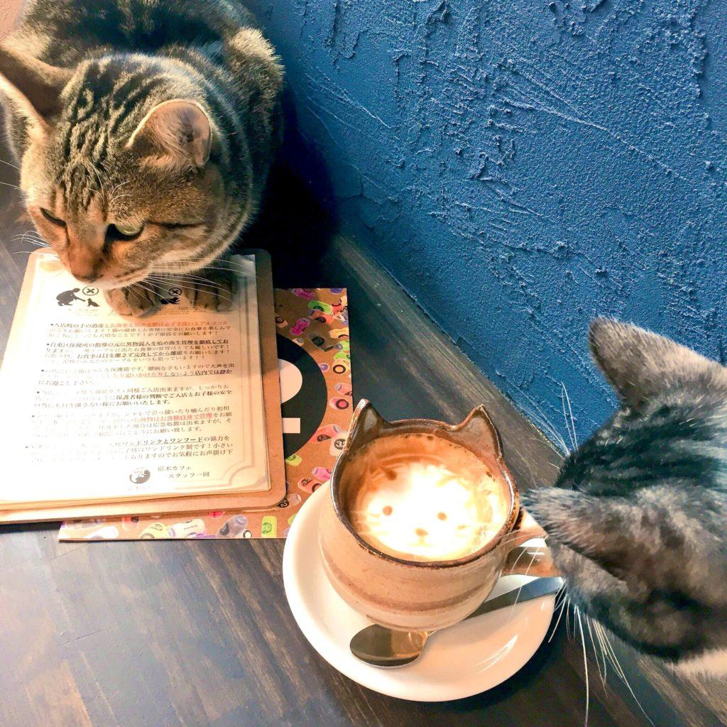 宿木カフェ YadorigiCafe&Restaurantのカフェ