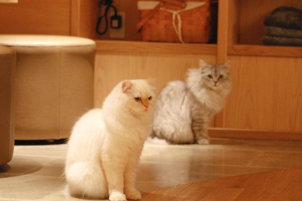 猫カフェモカラウンジ新宿店の猫