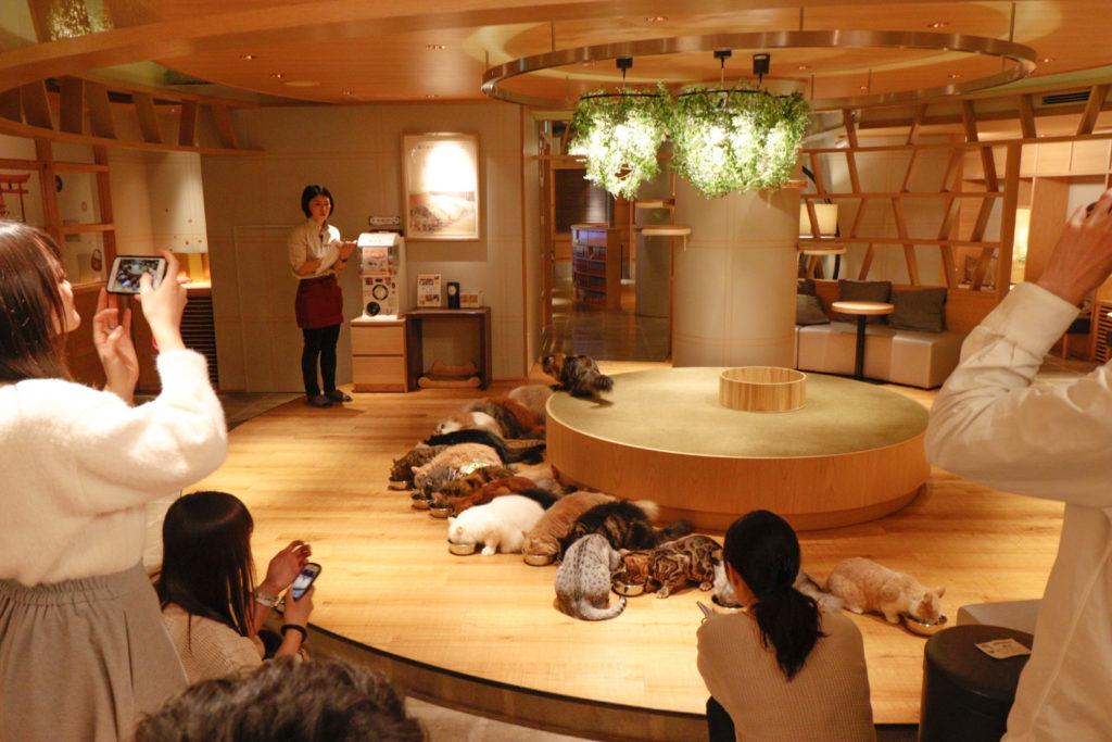 猫カフェモカラウンジ新宿店のごはんタイム