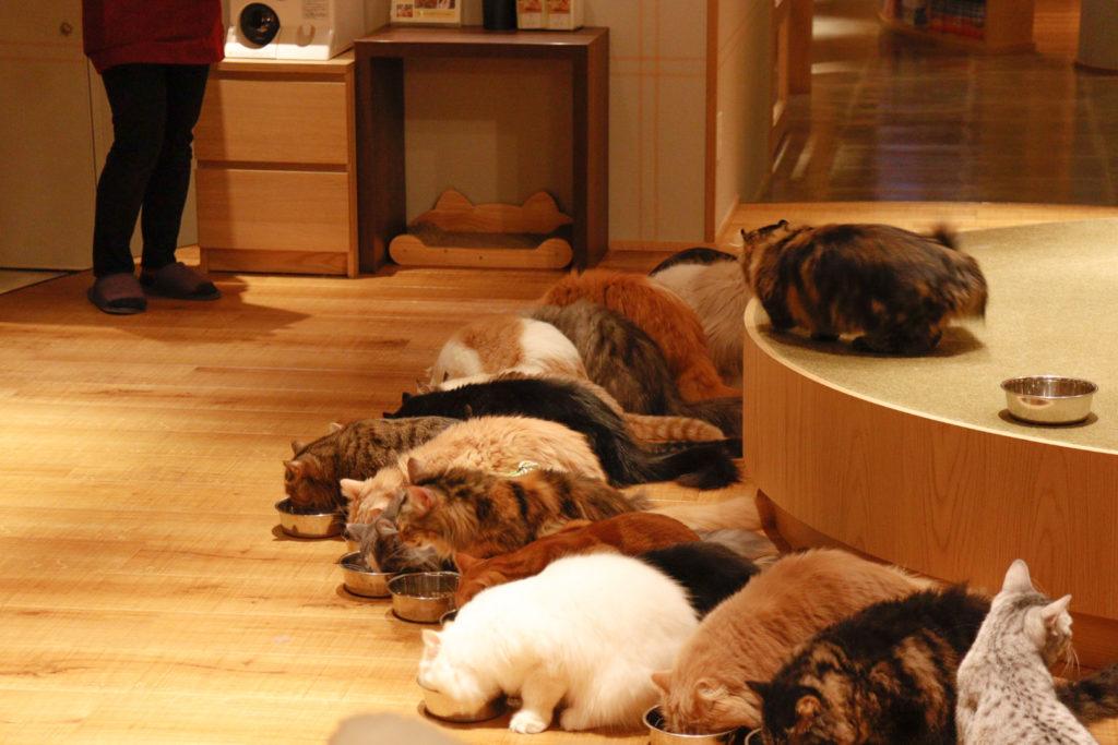 猫カフェモカラウンジ新宿店のご飯タイム