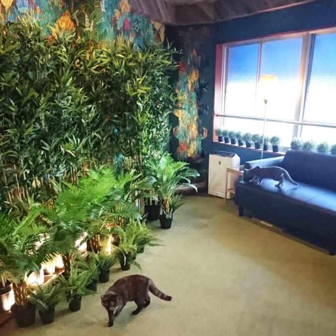空陸家 新宿三丁目ジャングル店