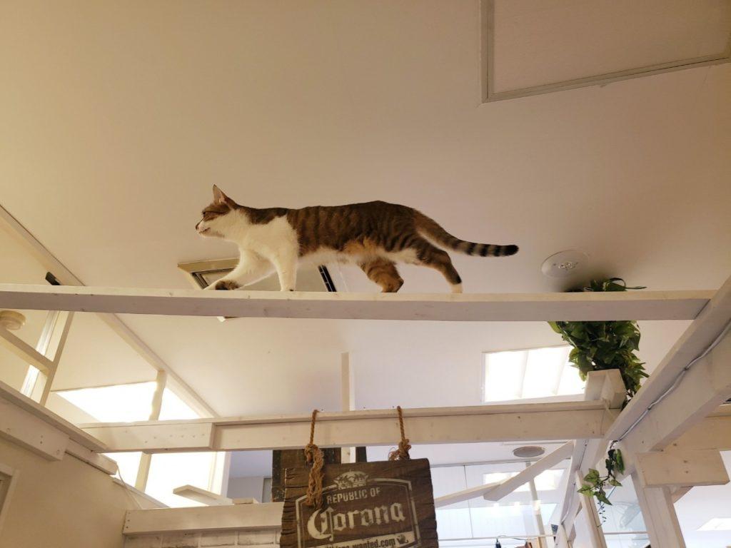 保護動物カフェねこのす千葉東金店の店内