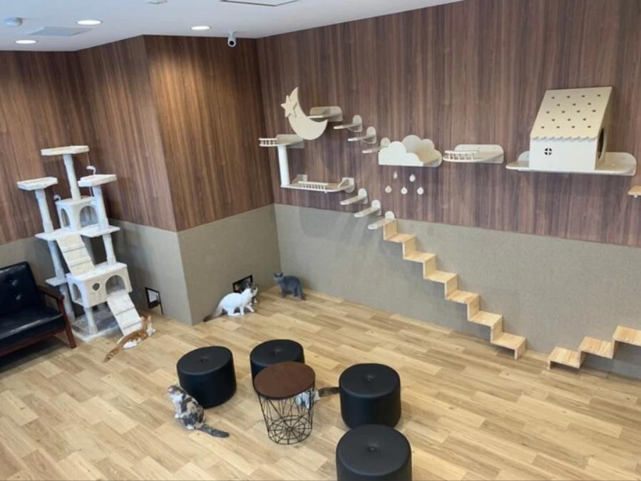 猫喫茶 空陸家 鹿児島店の店内