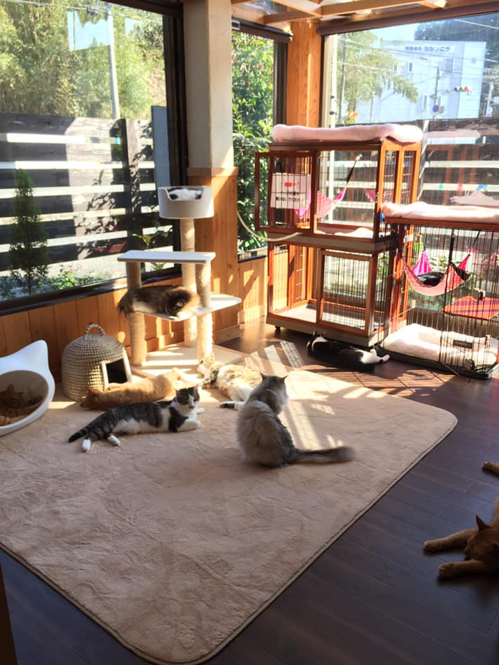 猫カフェ うたたね店内
