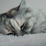 宮崎県でおすすめの猫カフェ5選