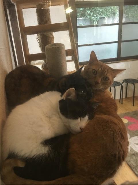 猫カフェジャスミンライスの猫