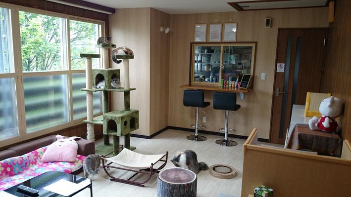猫cafe宿くーちゃんの家の店内