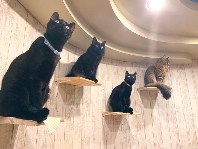 猫カフェ ニャンコリズム室蘭店の店内