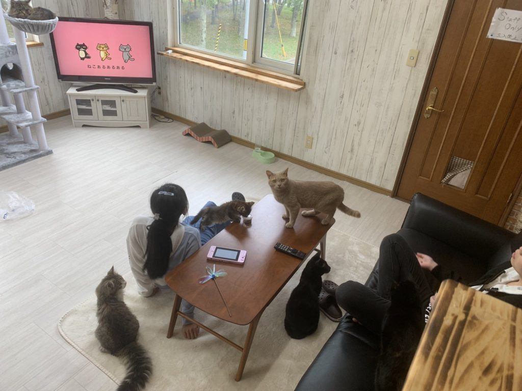 猫カフェ ニャンコリズム苫小牧店の店内