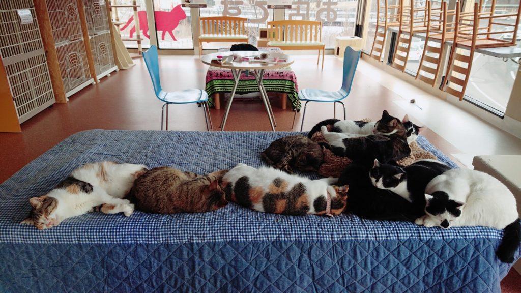 Cat Cafe Wish猫スペース