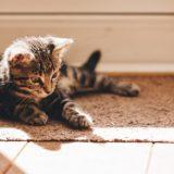 【2020年版】北海道でおすすめの猫カフェ11選(函館・帯広・小樽・旭川)