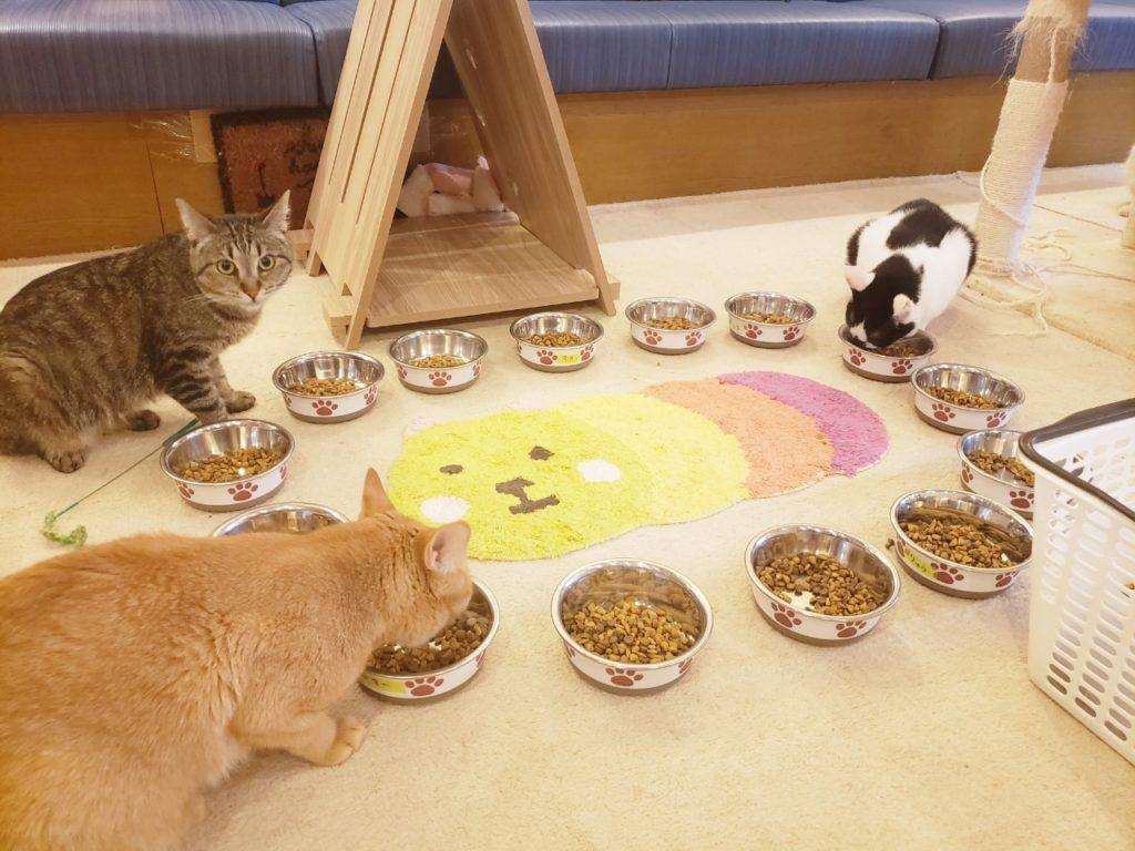 猫カフェ キャッティーズの店内