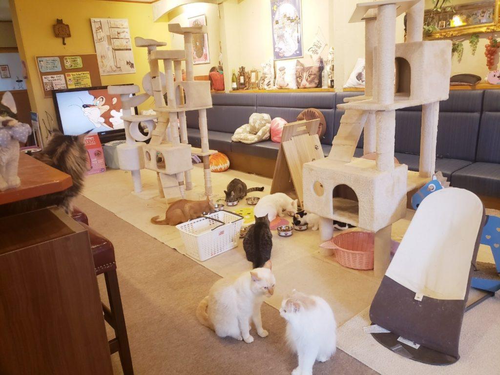 猫カフェ キャッティーズ店内