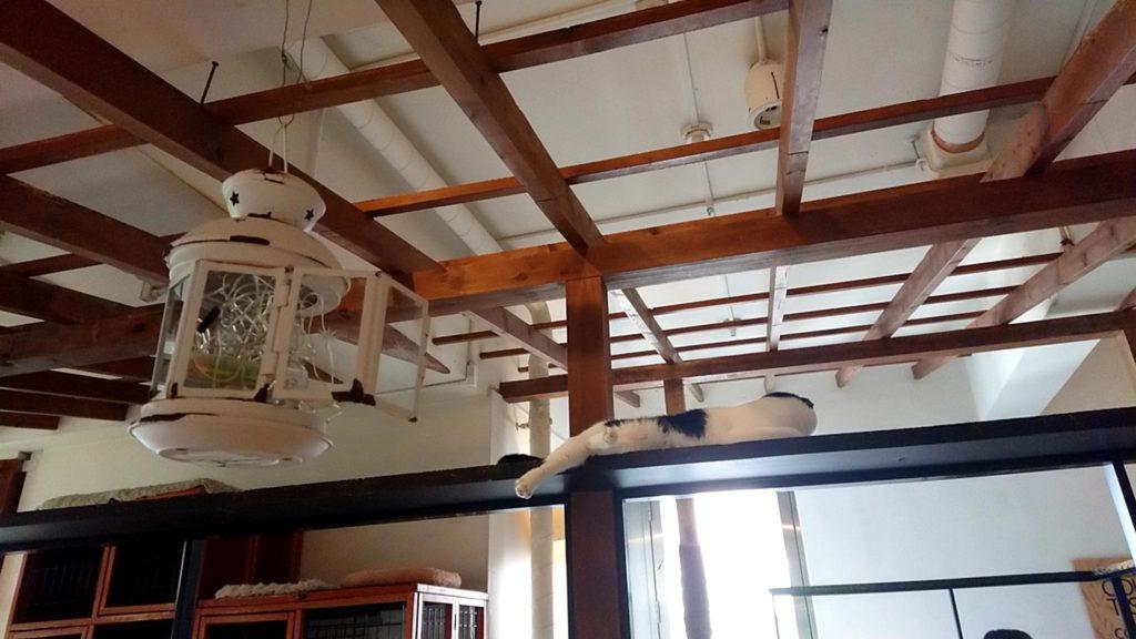 猫カフェ キューリグ ロフト天神店の店内