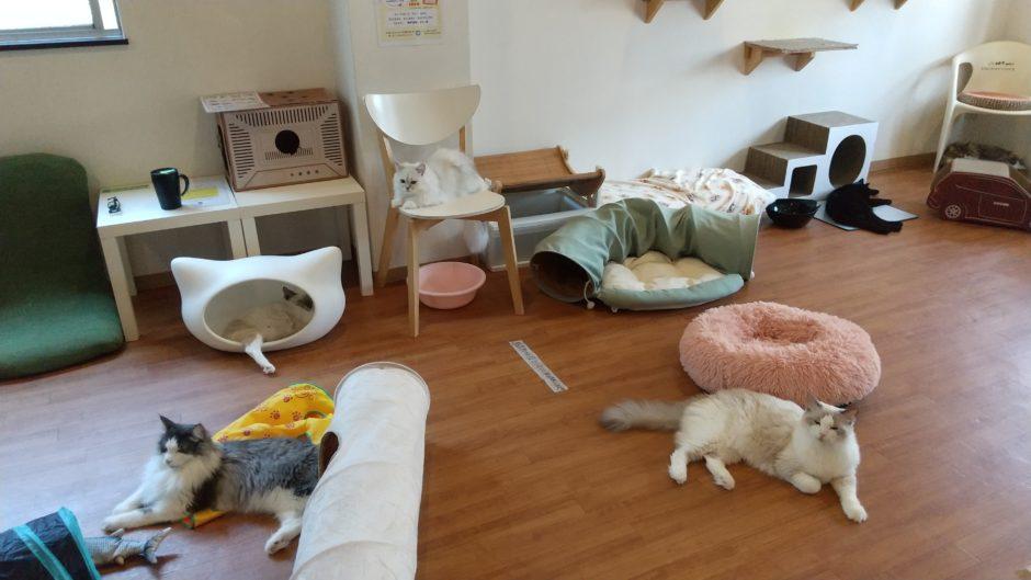 猫カフェ ラグドールの店内