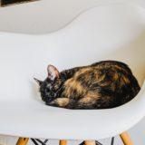 【2020年版】川崎でおすすめの猫カフェ3選