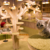 【2021年版】猫カフェモカ 大阪心斎橋店の体験レポート!