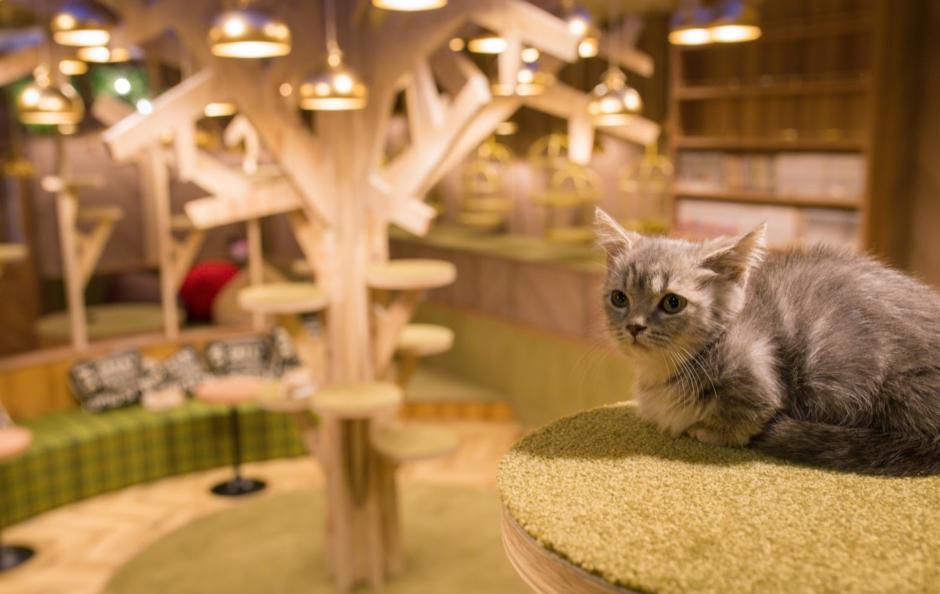猫カフェモカ 大阪心斎橋店