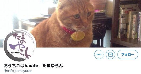 猫カフェたまゆらん