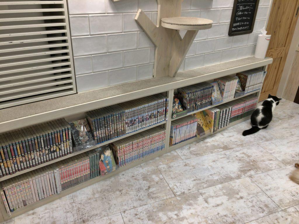 猫カフェモカ町田ジョルナ店の店内