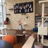 【2021年版】猫カフェ「コックンの別荘レミィ町田店」体験レポート!
