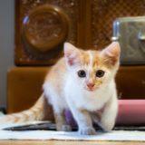 【2020年版】横浜でおすすめの猫カフェ16選