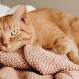 【2020年版】愛知でおすすめの猫カフェ15選