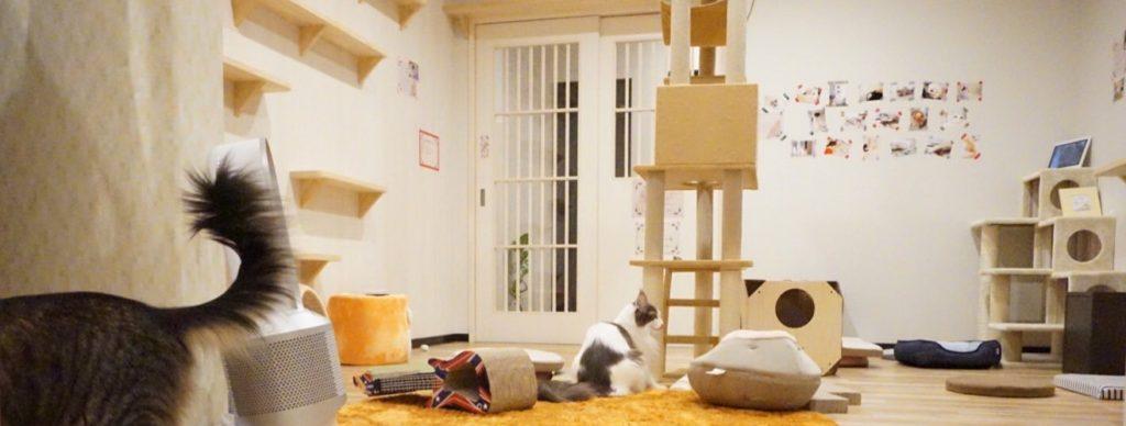 猫カフェmof.mof店内