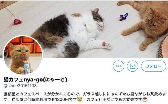 猫カフェ NYA-GO