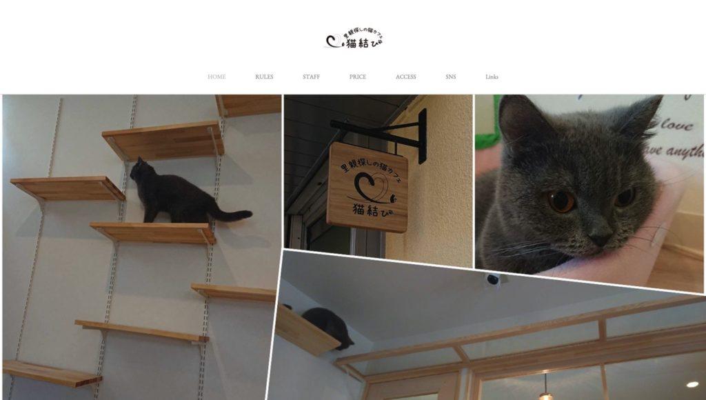 里親探しの猫カフェ 猫結び