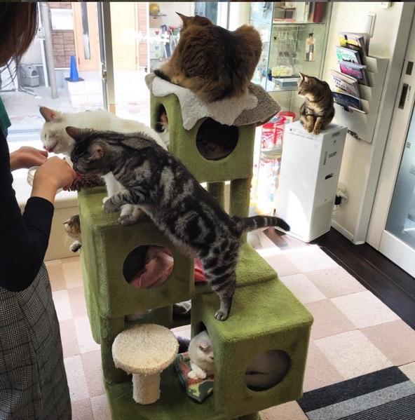 猫カフェ ひなたぼっこの店内