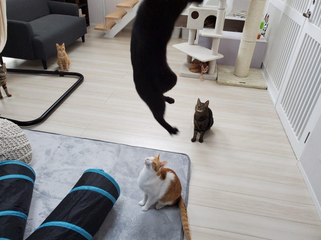 cat cafe ウイヤツメの店内