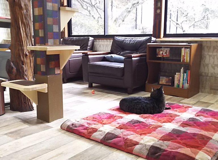 保護犬&猫カフェ しっぽの森の店内