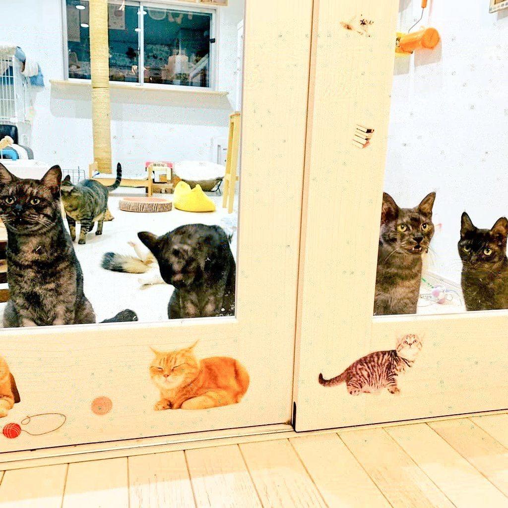 猫カフェ NYA-GOの店内