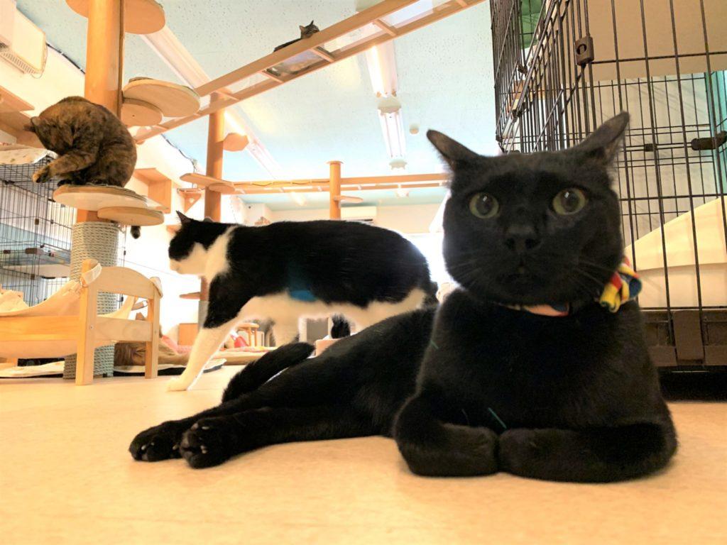 保護猫カフェ カーロの店内