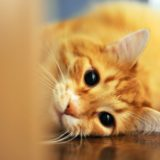 【2020年版】名古屋でおすすめの猫カフェ15選