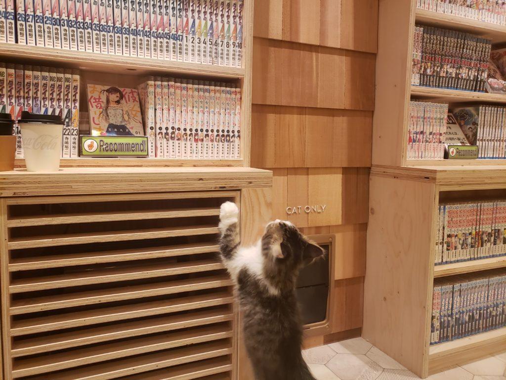 猫カフェモカ(MOCHA)宮崎橘通店の店内