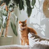 【2021年版】兵庫でおすすめの猫カフェ19選