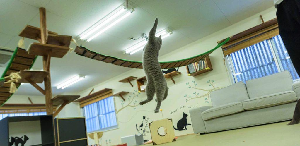 猫カフェ にあにゃあ