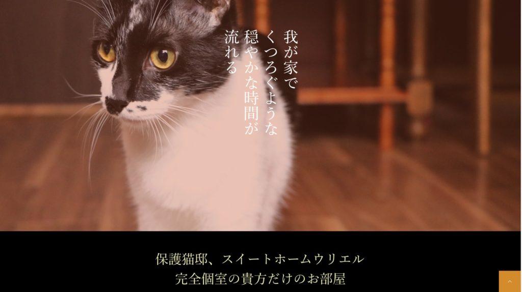 保護猫カフェ・ウリエル