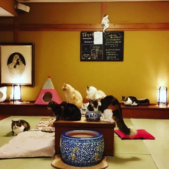 猫の時間の店内
