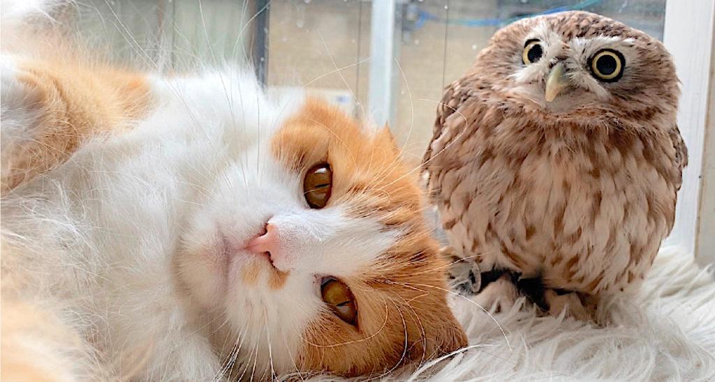 フクロウコーヒーの猫とフクロウ