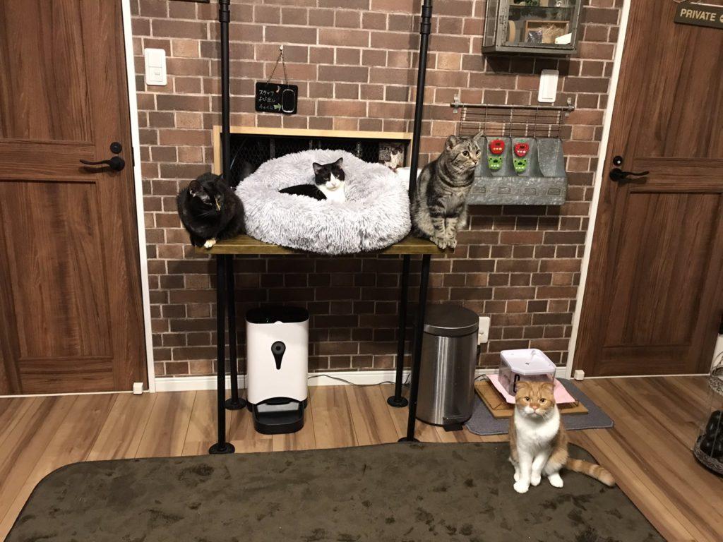 ねこ田さん家の猫