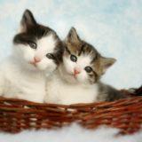 【2021年版】天王寺でおすすめの猫カフェ3選【大阪猫カフェ】